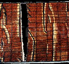 CARPET ANCESTRAL