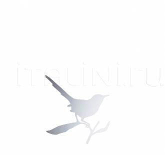 Настенное зеркало TAYLOR BIRD Driade